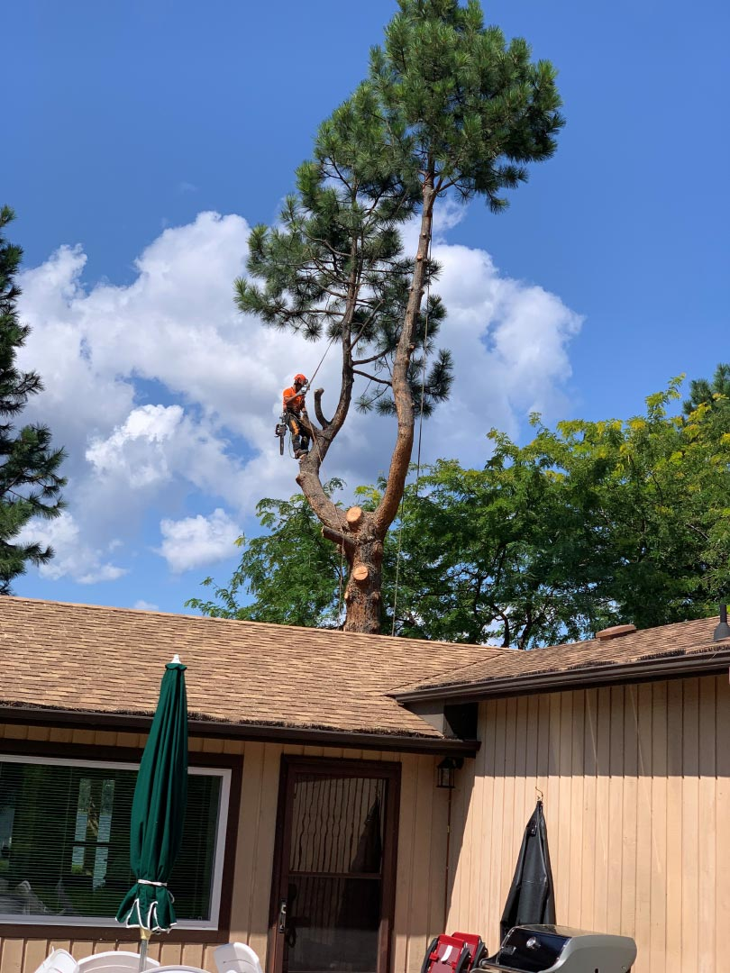 Scotty Tree Pre Storm Tree Removal