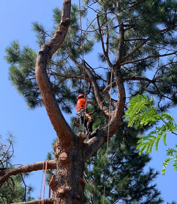 Scotty Tree - Tree Care Services